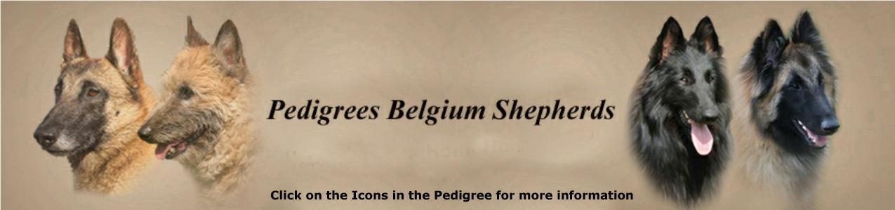 Stambomen Belgische Herders